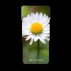 237_container_bloemen_Madeliefje_enkel