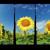 215 bloemen zonnebloemen_3luik