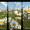 245 bloemen_madeliefjes_in_het-veld_3luik